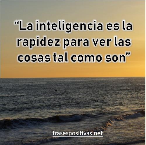 frases de inteligencia cortas