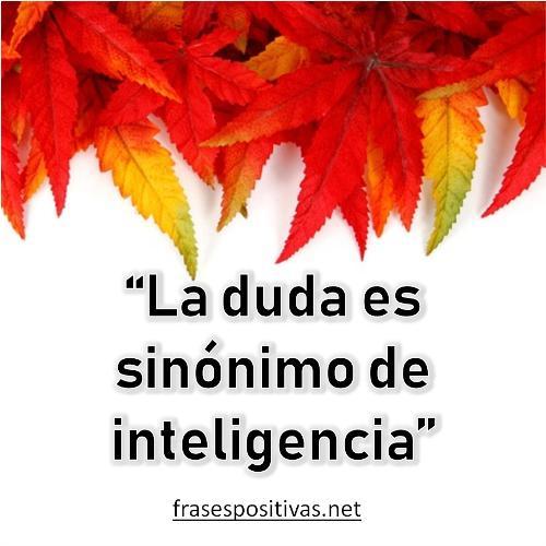 frases cortas de inteligencia