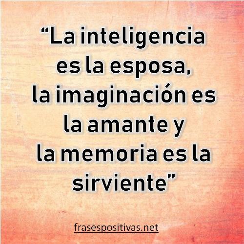 frases para compartir de inteligencia